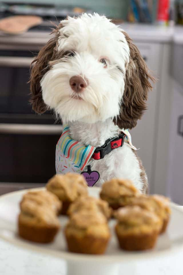 peanut butter pupcakes on white cake plate with dog behind