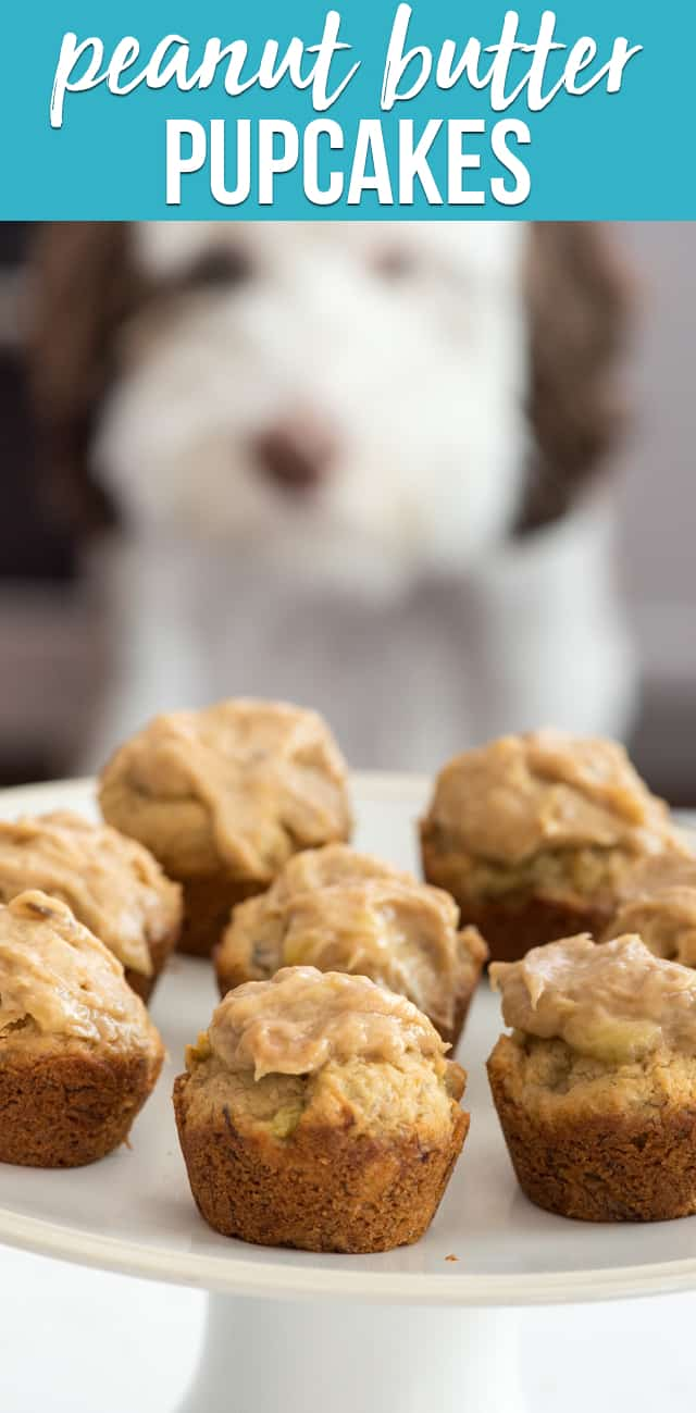 Peanut Butter Pupcakes are cupcakes for dogs! These easy cupcakes have no yucky ingredients and a perfect for dogs, filled with peanut butter and banana complete with frosting.