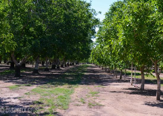 walnut-farm-tour (1 of 15)