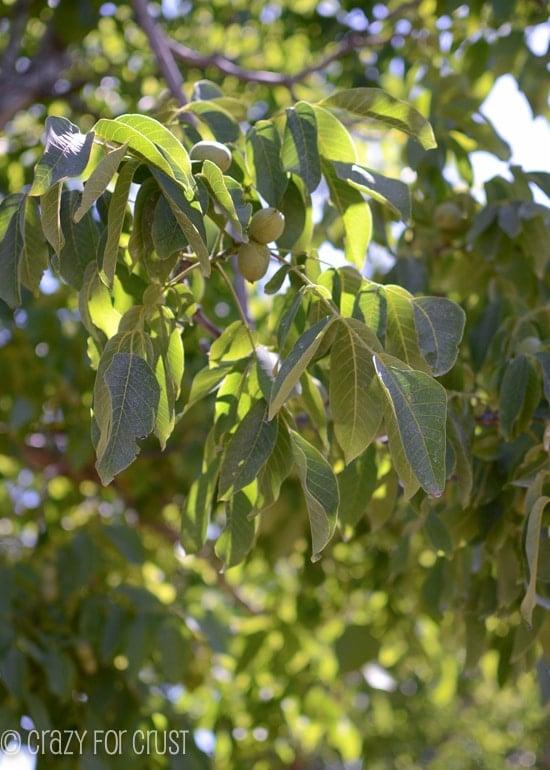 walnut-farm-tour (2 of 15)