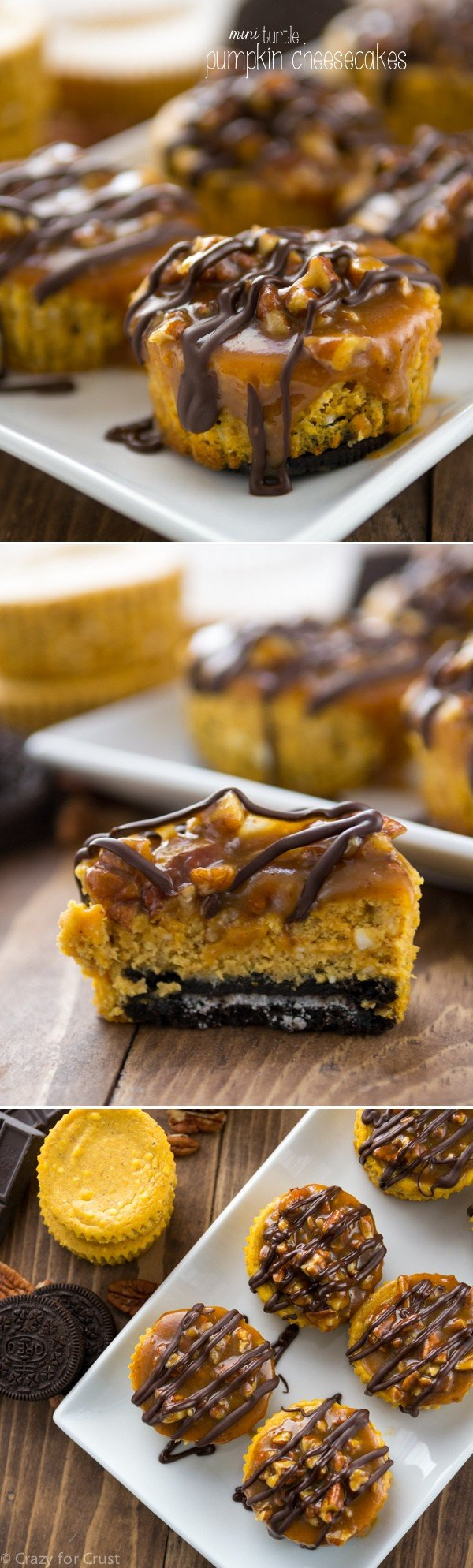 Mini Turtle Pumpkin Cheesecakes with an Oreo Crust and topped with caramel, pecans, and chocolate. Perfect for Thanksgiving!