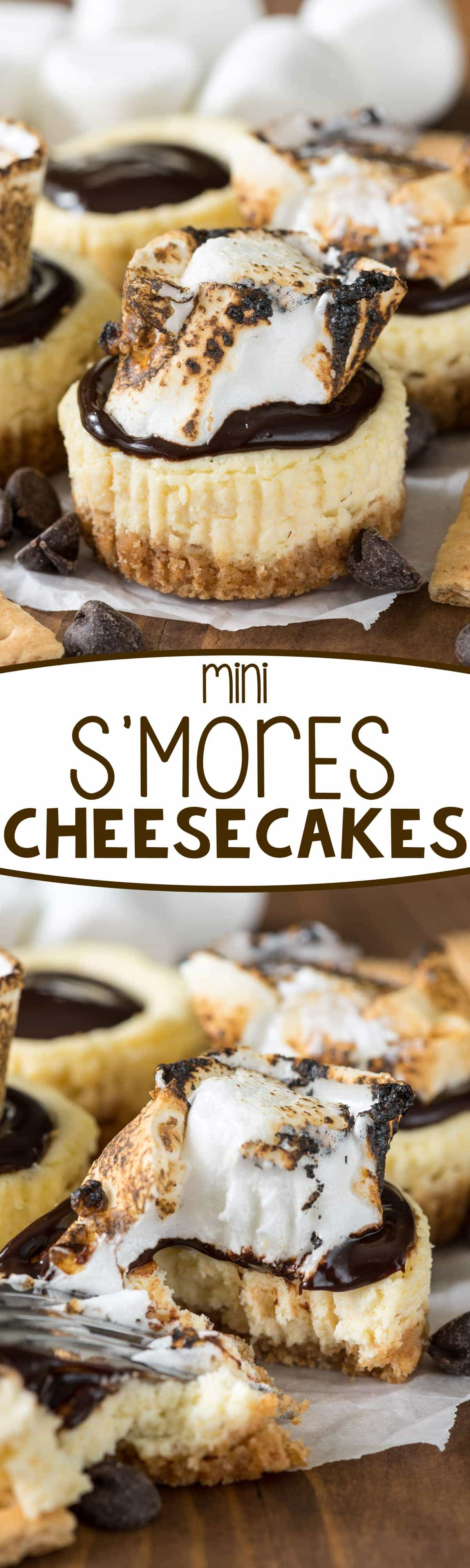 Mini S'mores Cheesecakes - this easy cheesecake recipe makes the perfect 12 mini cheesecakes! Top them with chocolate and a toasted marshmallow for indoor s'mores!