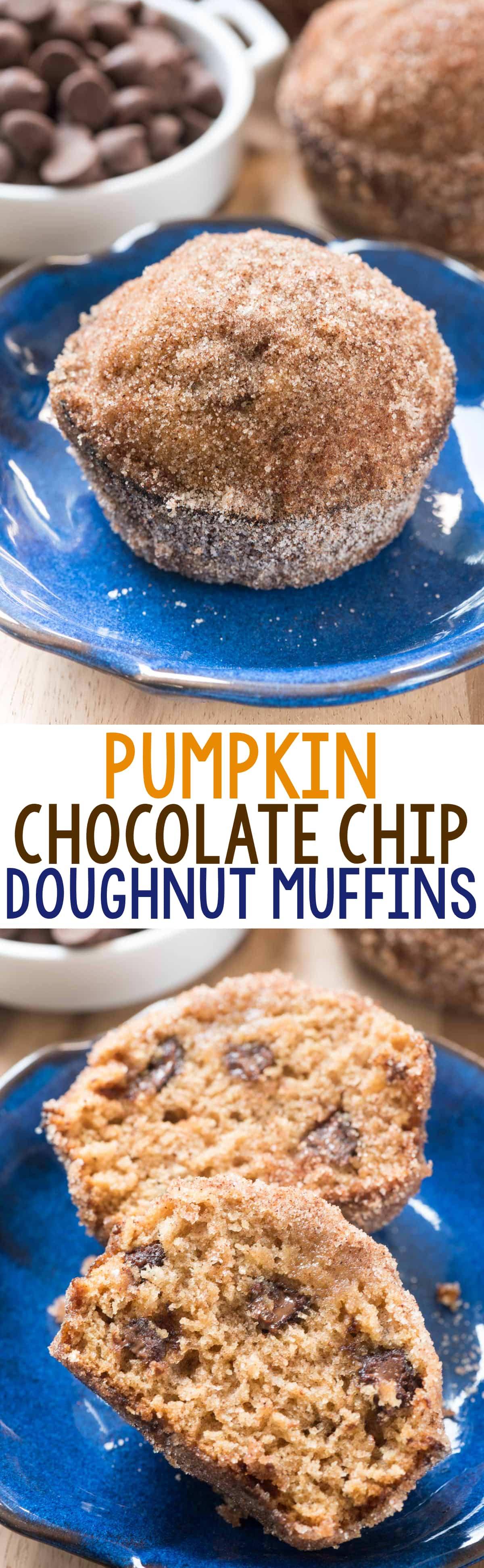 Chocolate Chip Pumpkin Doughnut Muffins - easy pumpkin muffins filled with chocolate and rolled in cinnamon sugar! A great Thanksgiving recipe!