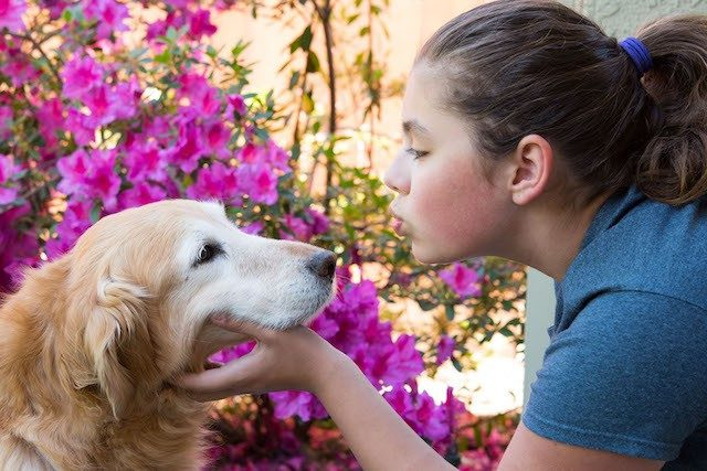 girl kissing dog with flowers behind