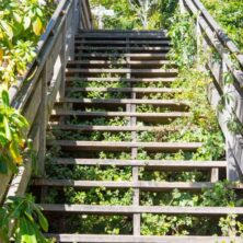 Take the hidden steps to Coit Tower for gorgeous views of San Francisco and a nice workout. See the hidden homes and great views of the San Francisco Bay!