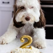 puppy looking at dog cake