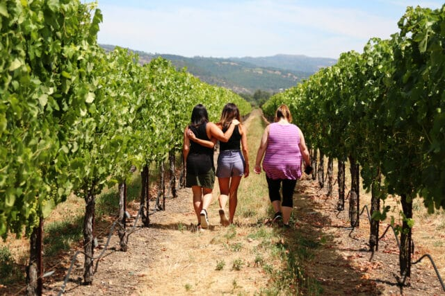 walking in vineyards at St. Francis winery