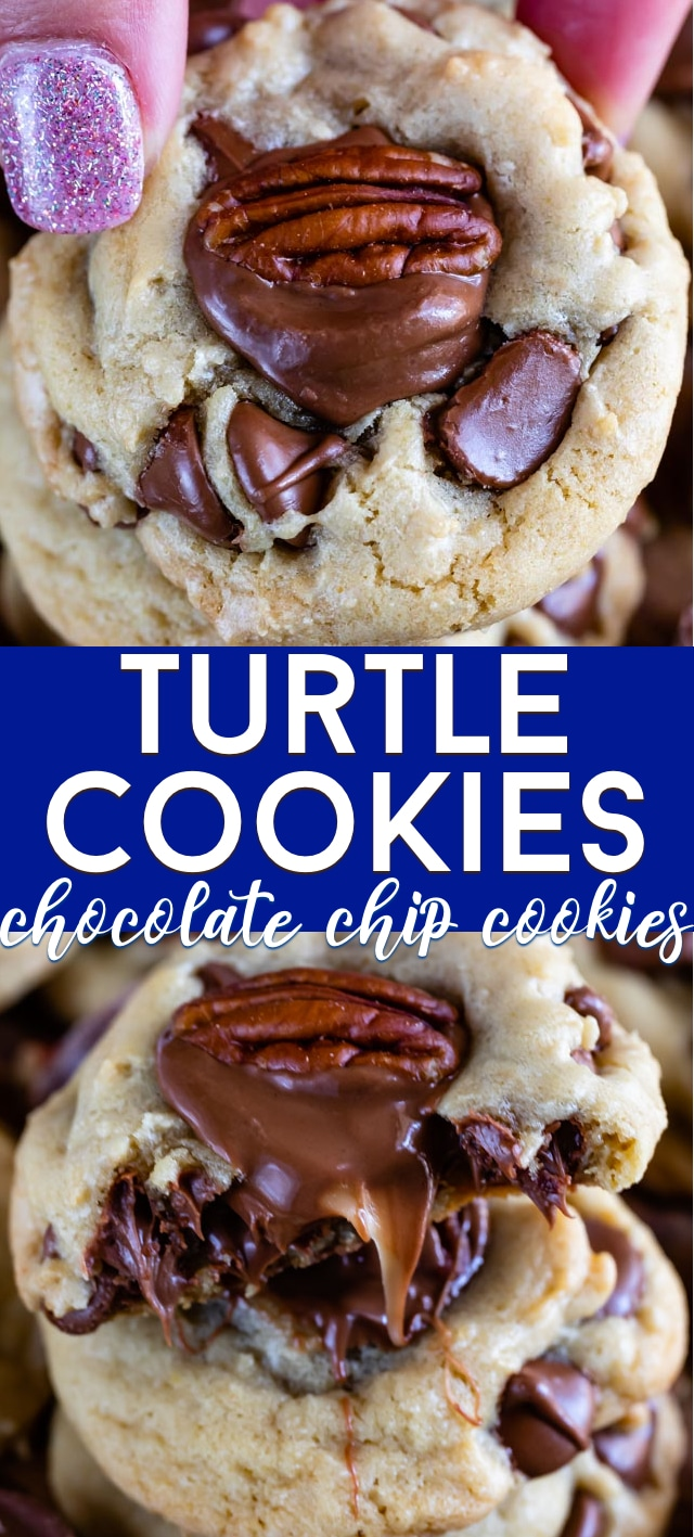 turtle cookies collage photos