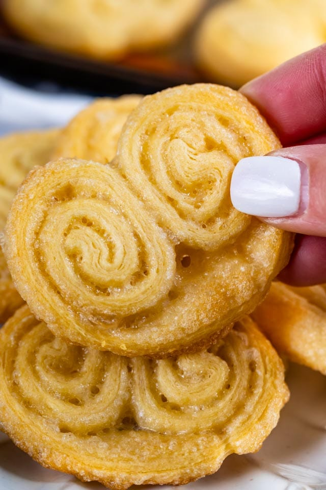 Palmier close up